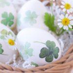 セキセイインコが卵を温めない!原因と対処法を徹底解説
