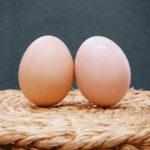 セキセイインコが卵を食べる!理由と対処法を紹介!【徹底検証】