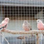 インコがいるカフェin大阪!鳥と触れ合えるおすすめスポット5選!