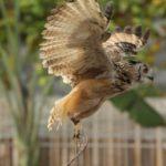 フクロウの足が長いのは何故?気になる生態を徹底解説!【まとめ】