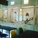 インコのカフェ!千葉でおすすめのお店3選