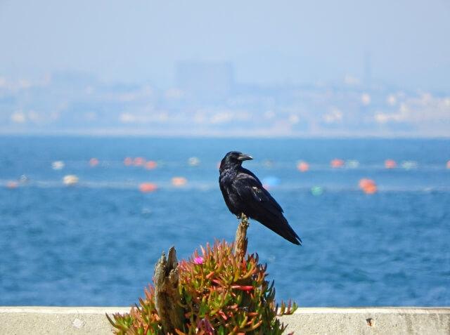 夜 カラス 鳴く スピリチュアル 夜に鳥の鳴き声を聞くときのスピリチュアルな意味