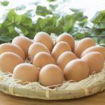 鶏の飼育で卵が生まれたら?産卵したときに知っておきたい注意点!