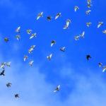 鳩の撃退は音が効果的なの?鳥を追い払う方法やアイテムなどを紹介!
